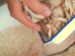 秋鮭とキノコの炊き込みごはん